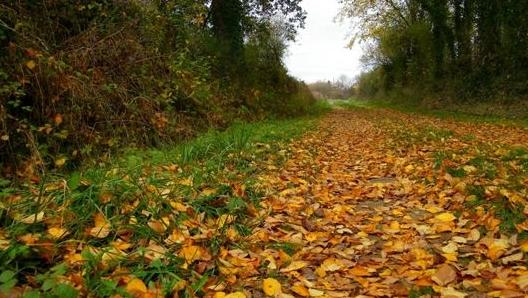 l'arrivée de l'automne